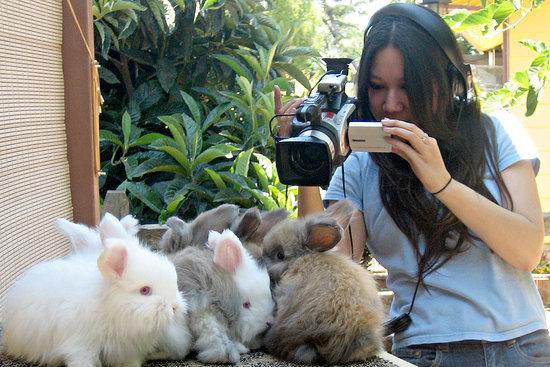 Hare-Raising Documentary Hops Into Competitive Bunny World