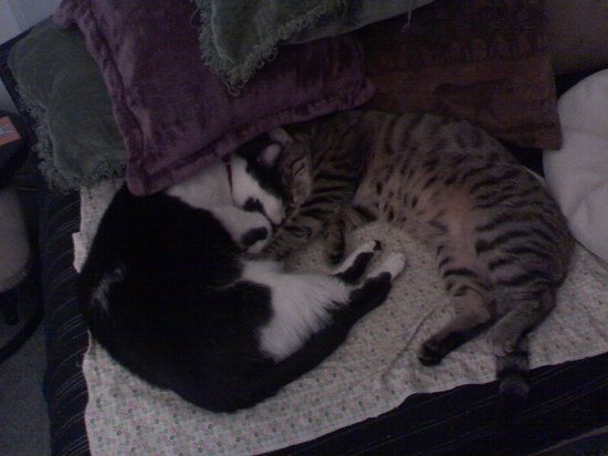 The Ying-Yang Kitties