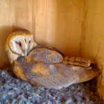 """Owlet Cam: Get on """"Egg Hatch Watch"""" With Molly"""