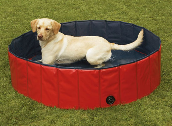 Buy a Portable Pool For Dogs
