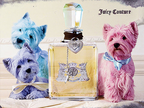 Juicy Wallpaper 3 westies puppies