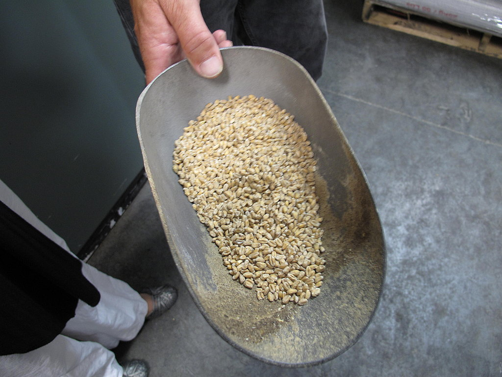 On their own, these grains of malt barley taste like Grape-Nuts, but they're brewed and fermented to become one heck of a tasty beverage.