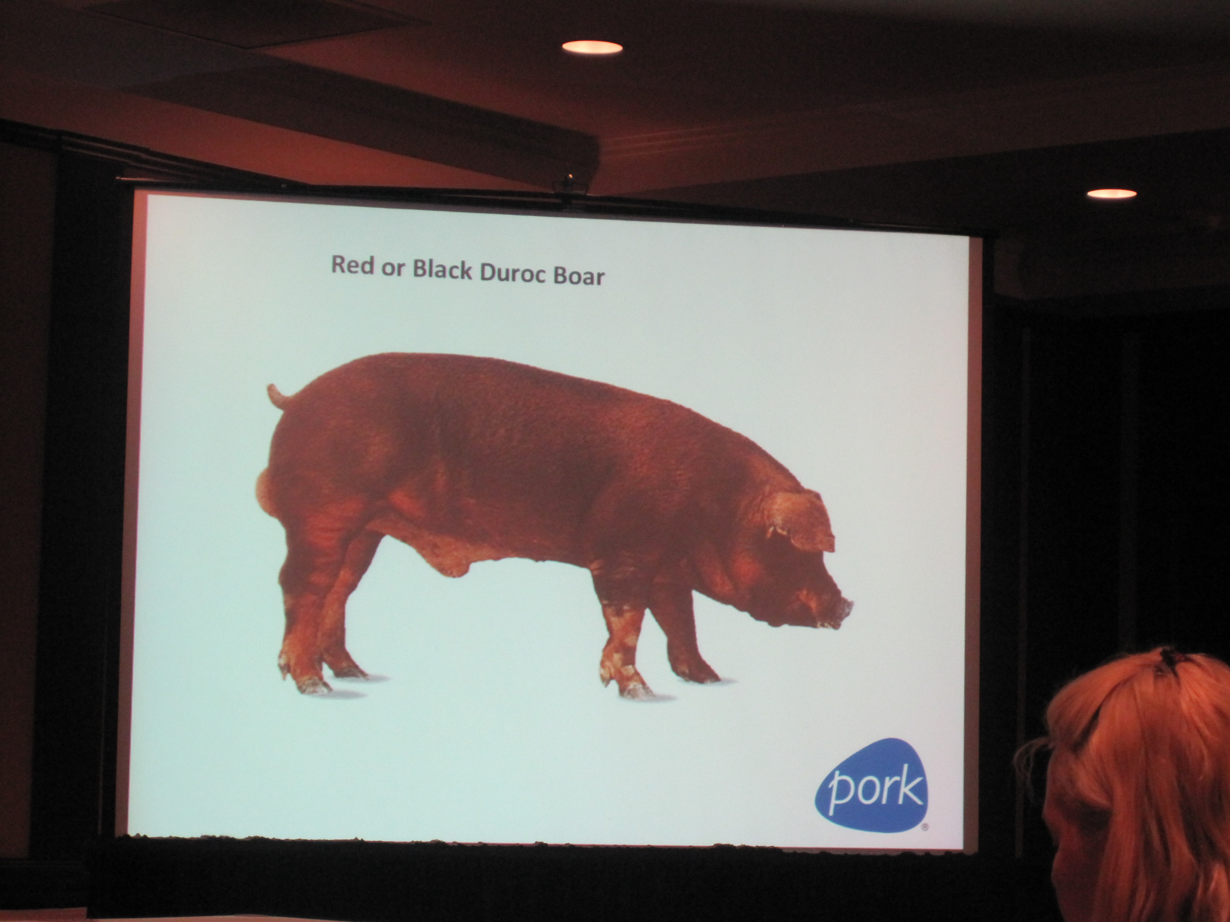 We learned the different kinds of pigs.