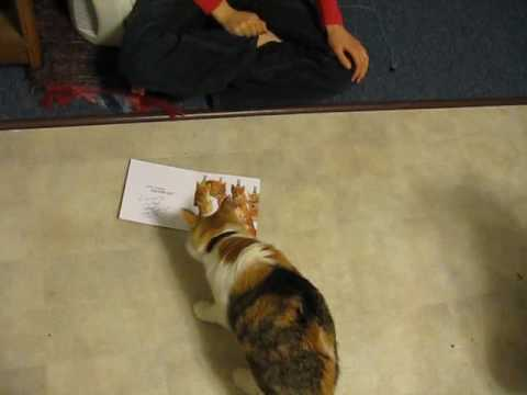 Video of Cat Attacking Birthday Card