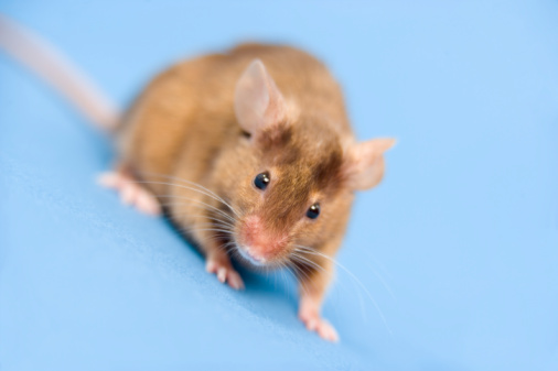 More Animal Testing Due to Increasing Botox Popularity
