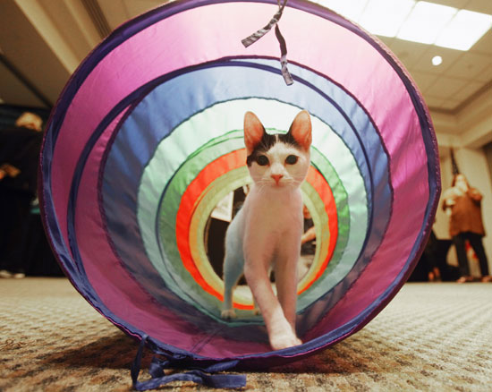 Tunnels For Dogs and Cats