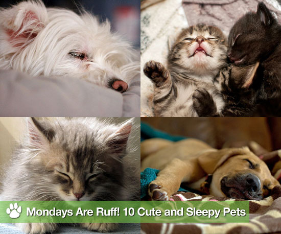 Pictures of Sleepy Cats and Dogs