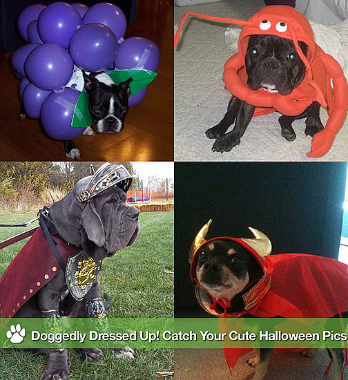 Doggedly Dressed Up! Catch Your Cute Halloween Pics
