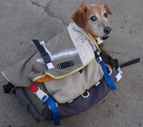 Can I Bring My Dog to Walgreens
