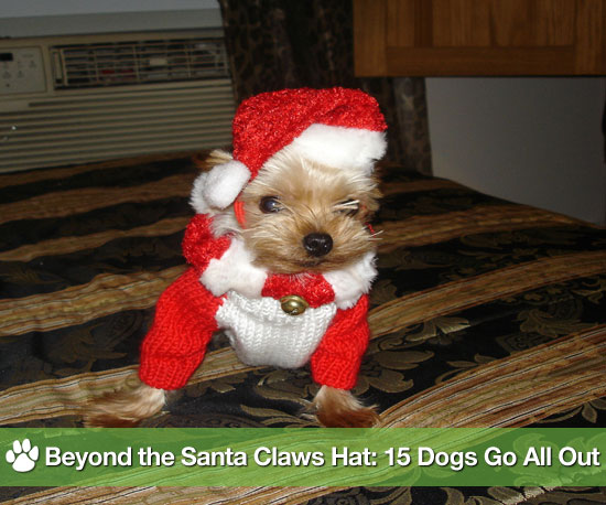 Pictures of Dogs in Christmas Costumes