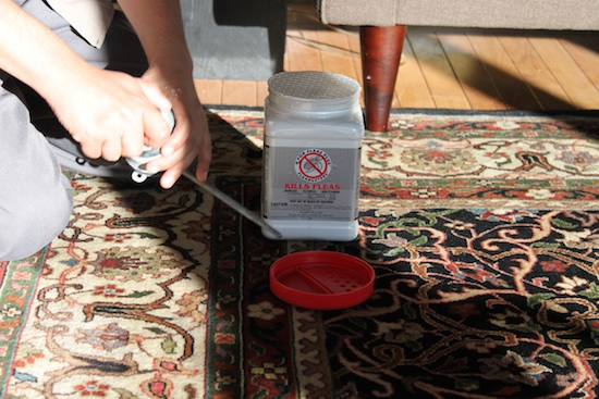 The technician loaded the Rx For Fleas powder into this tool to apply it to the baseboards.