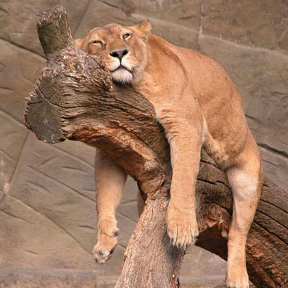 Facts About Animal Sleeping Habits