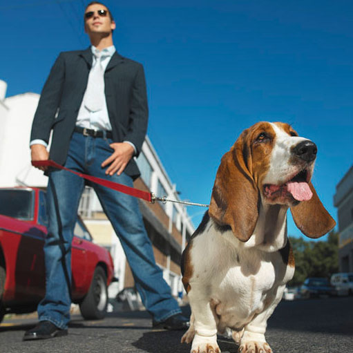 Tips For Walking With Dogs