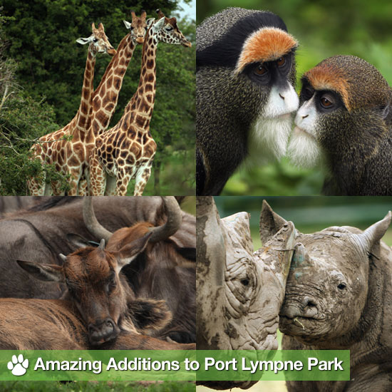 Amazing Additions to Port Lympne Park