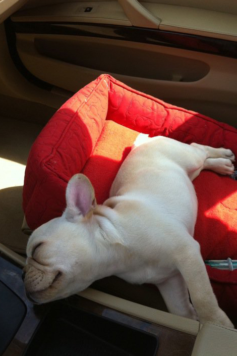 Pet Pic of the Day: Sweet Dreams