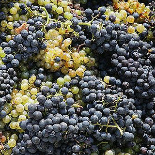 Red and White Wine Grapes