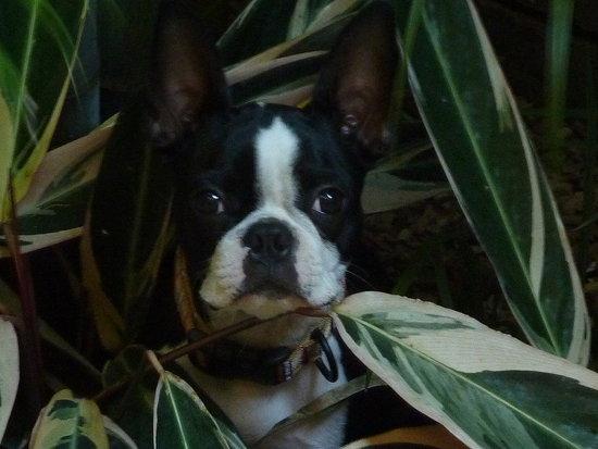 Jungle Monty