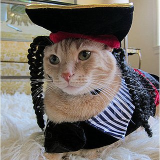 Cat Dressed Up as Pirate Picture