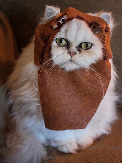 Ewok Cat