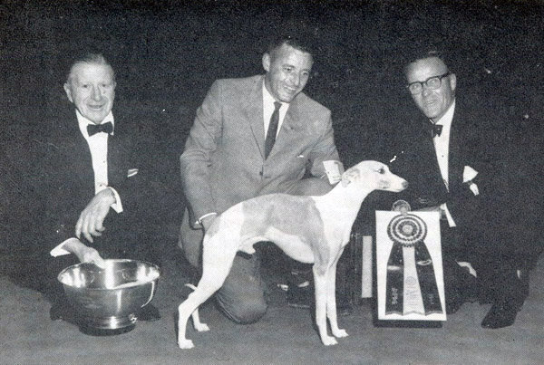 Whippet Ch Courtenay Fleetfoot of Pennyworth won in 1964. Source: American Kennel Club Archives