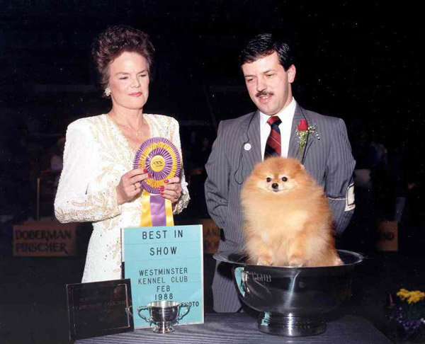Ch Great Elms Prince Charming, II, a Pomeranian, won in 1988. Source: American Kennel Club Archives