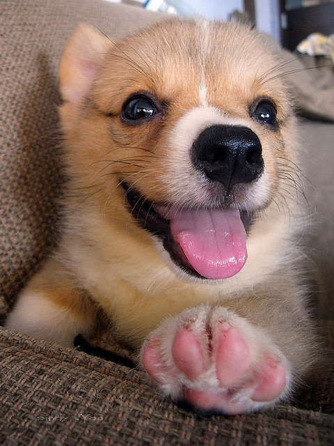 There's nothing like kicking back with your paws up on the couch. Source: Flickr user sⓘndy°