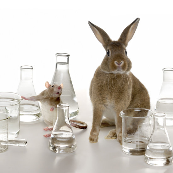 L'Oreal and ToxCast Aim to End Animal Testing