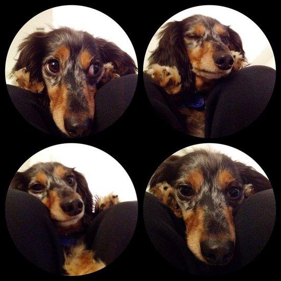 Meet Gus!