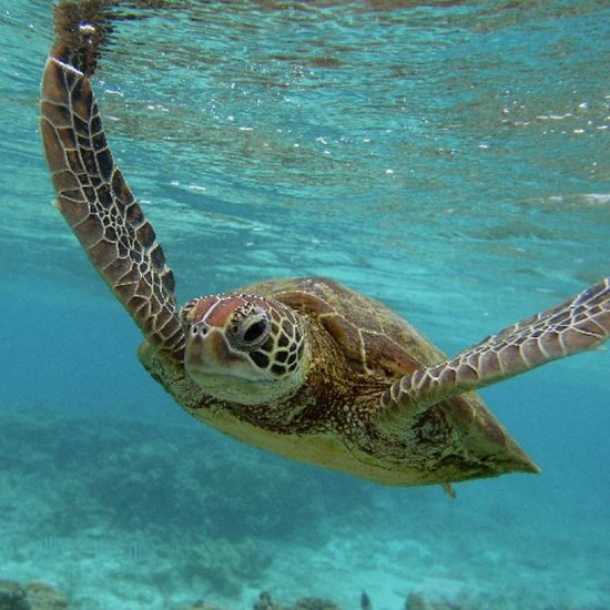 World Turtle Day 2012 Tips to Preserve Turtles