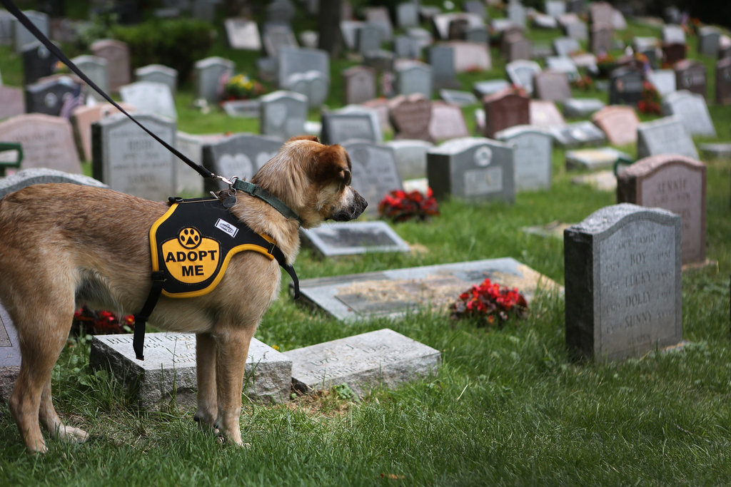 Rescue dog Brownie observed a moment of silence for pets who have passed away.