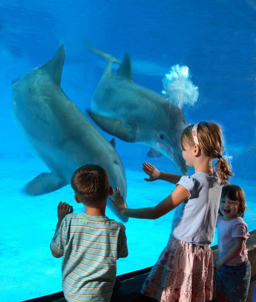 National Aquarium: Baltimore, MD