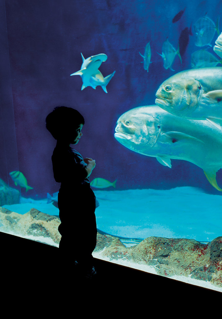 Tennessee Aquarium Chattanooga Tn The Top 10 Family