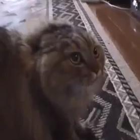 No No No No No Cat (Video)