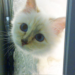 Is Choupette More Famous Than Karl Lagerfeld?