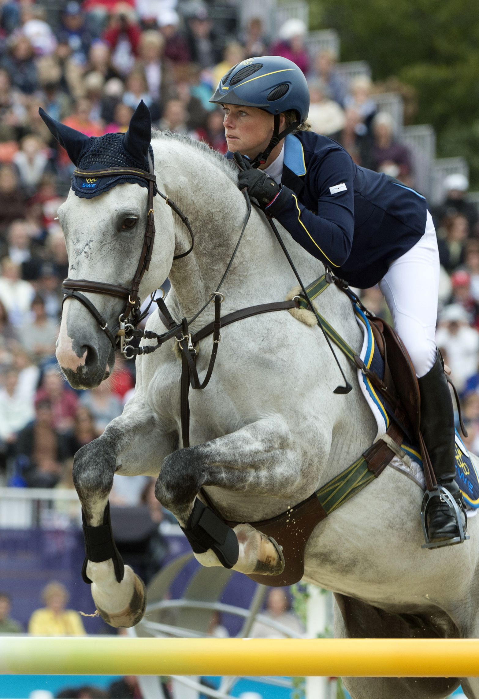 Swedish Warmblood