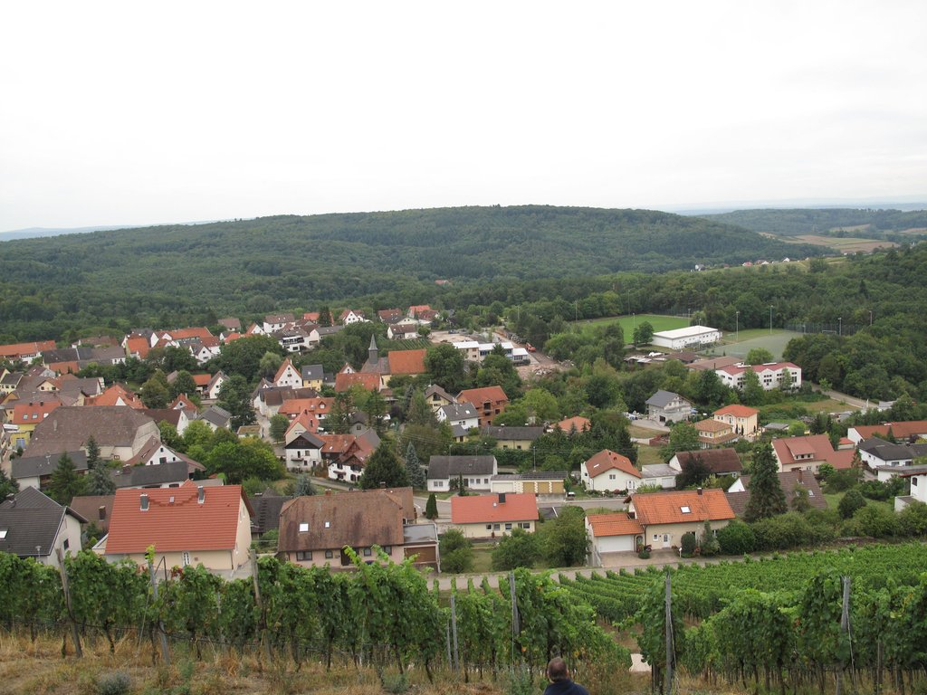 The View From Weingut Heitlinger