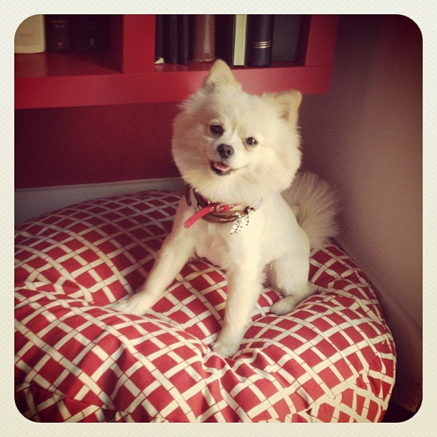 Comfy Bed, Happy Pom