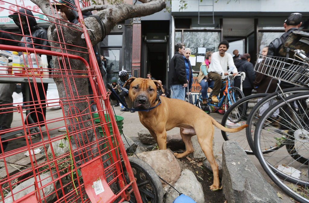 This dog stood his ground near a hub providing free food and electricity charging in NYC's East Village, where most residents were left without power after Sandy.