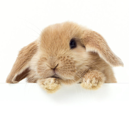 PETA Grant to Help End Animal Testing in China