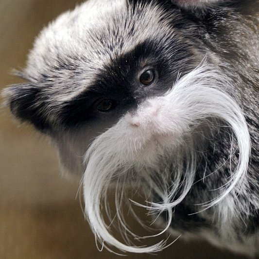 Animals With Mustaches | Pictures