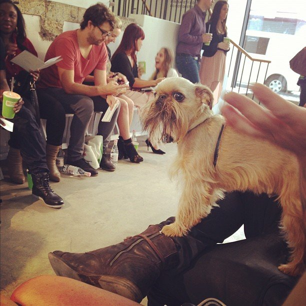 Best in show: this cute pup, spied front row at the Adidas A/W '13 runway show.