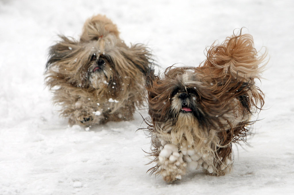 Two furballs sprinted through the snow at St. James's Park in London.