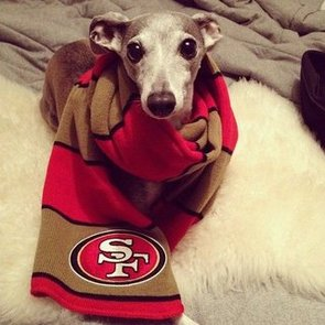 Dogs Wearing Football Jerseys | Pictures