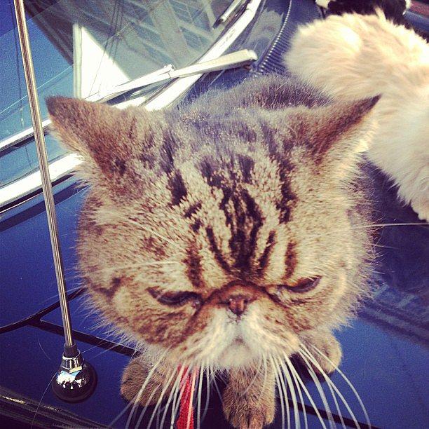 Zooey Deschanel shared a picture of her favorite cat from a recent New Girl episode. Source: Instagram user zooeydeschanel