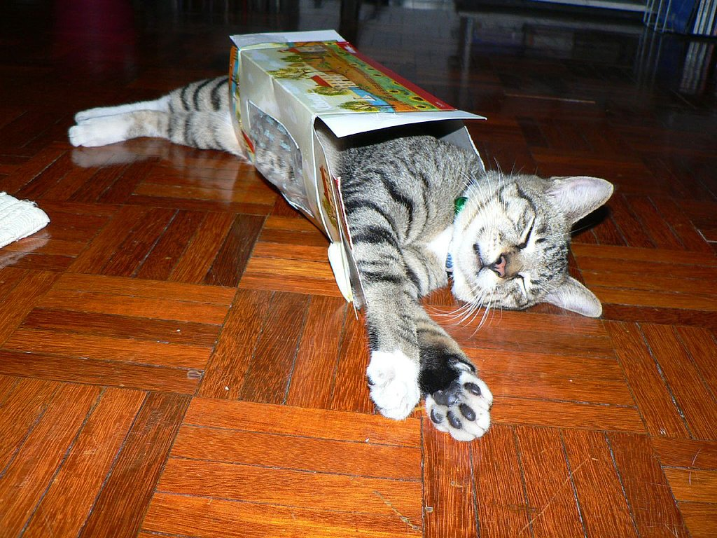 Cat Box Nap
