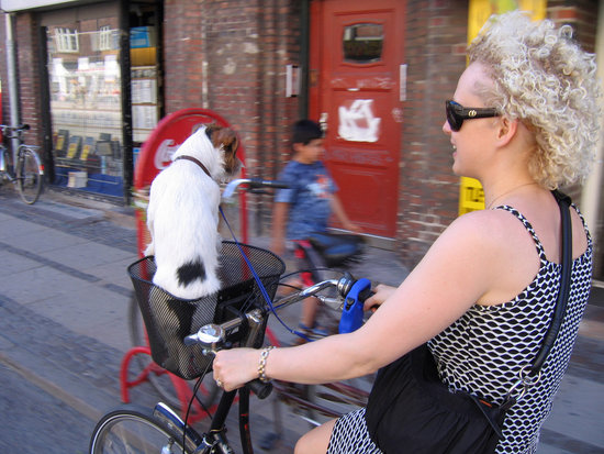 Ride On! Celebrate National Bike Week With Your Pup