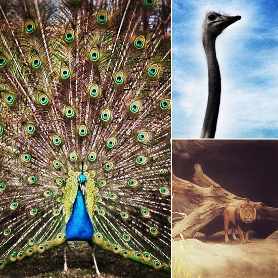 Artistic Pictures of Animals at the Hagenbeck Zoo