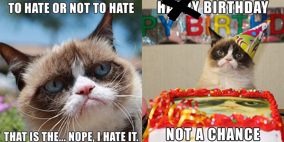 Grumpy Cat Gets a Movie Deal: Celebrate With These LOL Memes