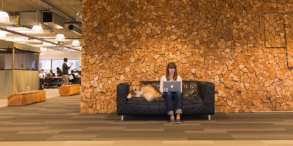 Celebrate Take Your Dog to Work Day With These Office-Going Pups