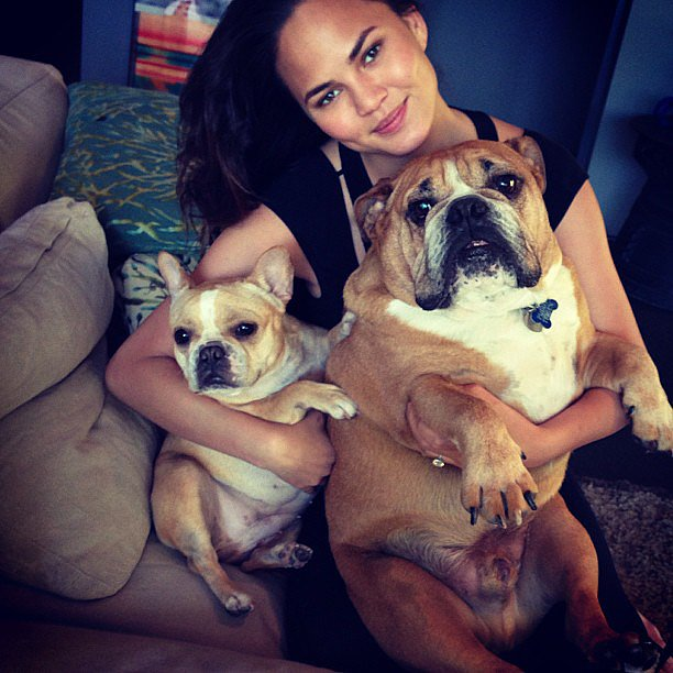 Chrissy Teigen's dogs, Pooey and Puddy, are practically famous — the social media-savvy model is constantly sharing sweet and funny pics of her pups on Instagram. Source: Instagram user chrissyteigen